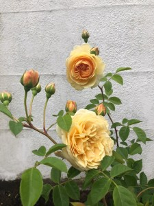 2---teasing-georgia-rose