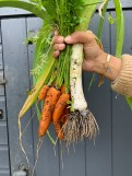 soup-harvest