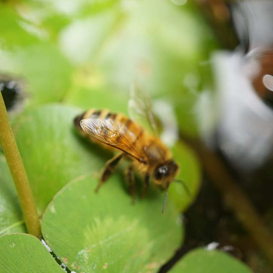 Backyard Beekeeping   Urban Homesteading   Growing Home