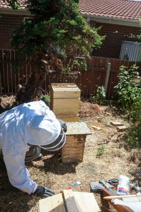 Backyard Beekeeping | Urban Homesteading | Growing Home