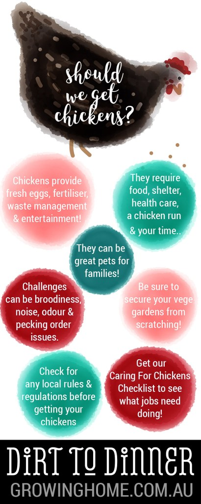 Beginners Guide to Getting Chickens | Dirt to Dinner guides | Growing Home