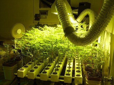Grow In Hydro The Dos Amp Donts In Marijuana Hydroponics