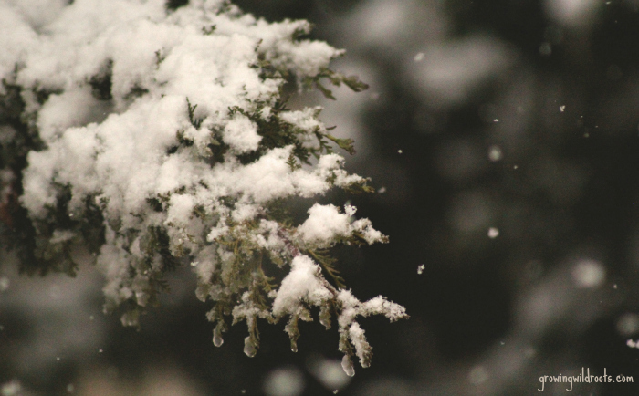 Why Homesteaders Need Winter