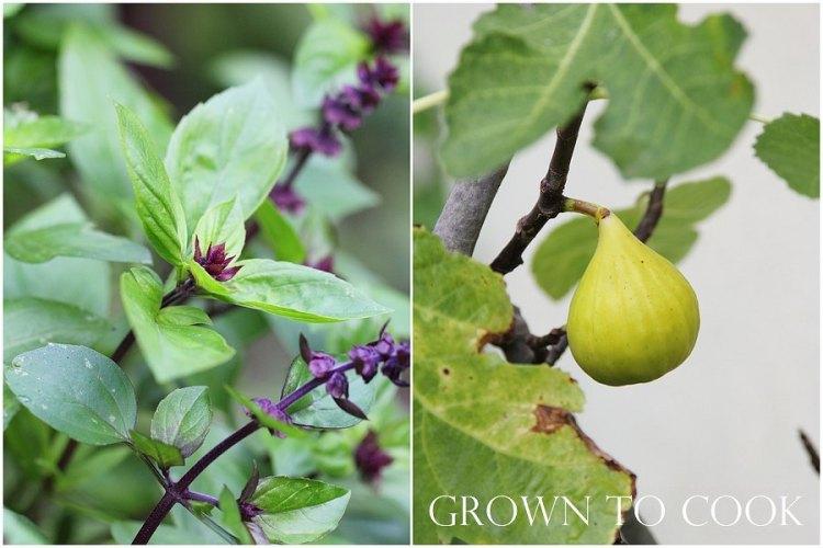 cinnamon basil and fig