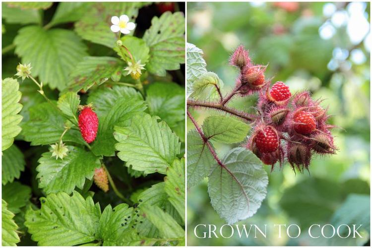 Alpine strawberries and Japanese wineberry