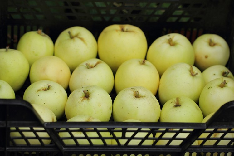 Manks Codlin apples