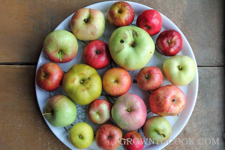 variety in apples
