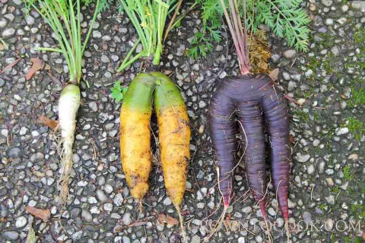 weird carrots