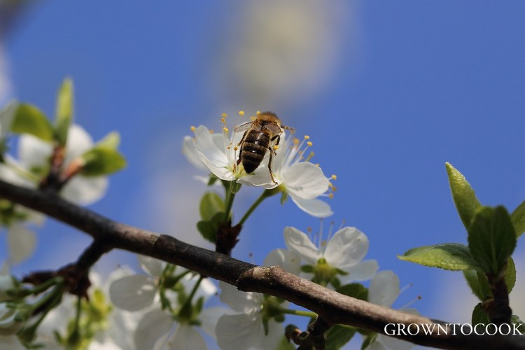 bee on fruit tree