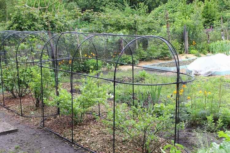 Garden jobs in May