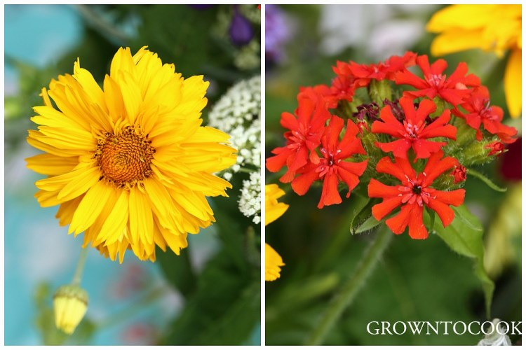 heliopsis and lychnis