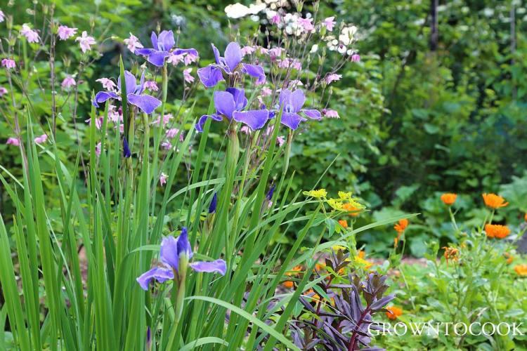 perennial cut flower border