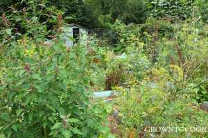 allotment in august