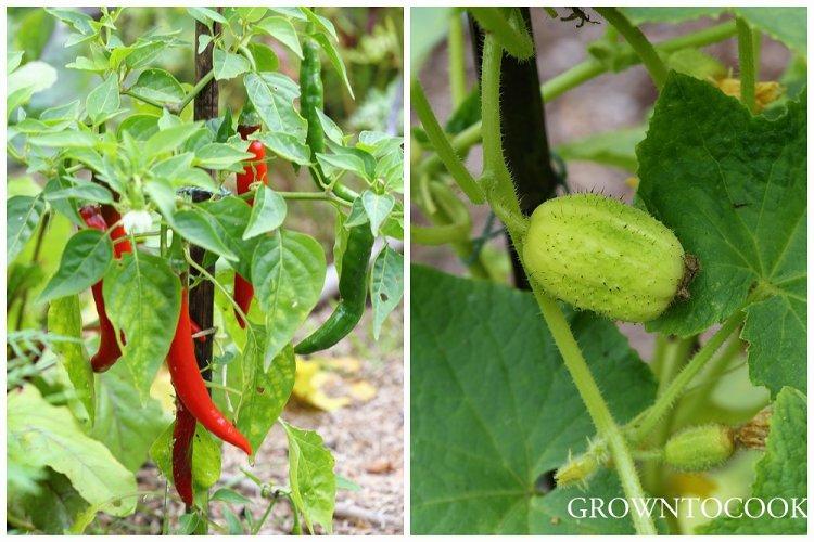 chili pepper and lemon cucumber