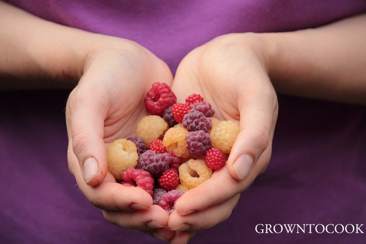 berries from our edible forest garden