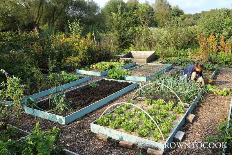 allotment in september