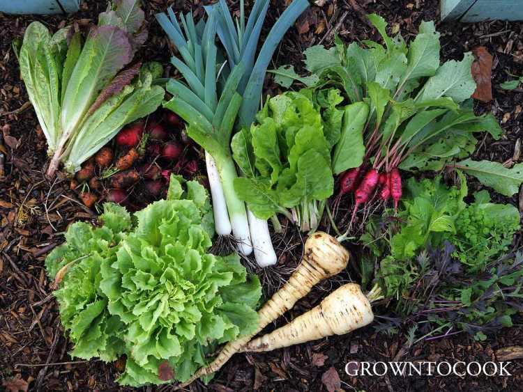 November harvest from the allotment