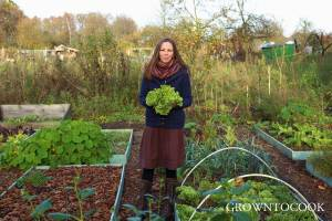 november on the allotment