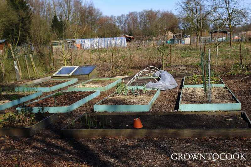 Allotment in march