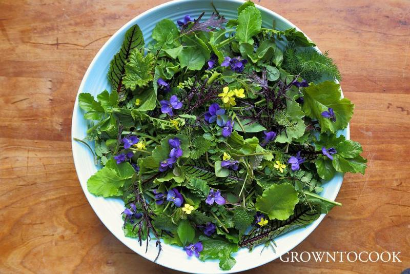 early april salad from the edible forest