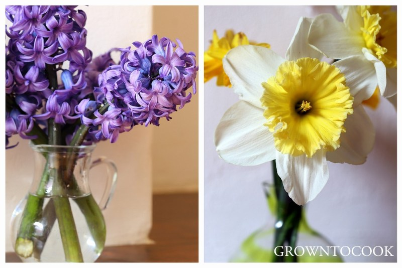 """hyacinth and narcissus """"Ice Follies"""""""
