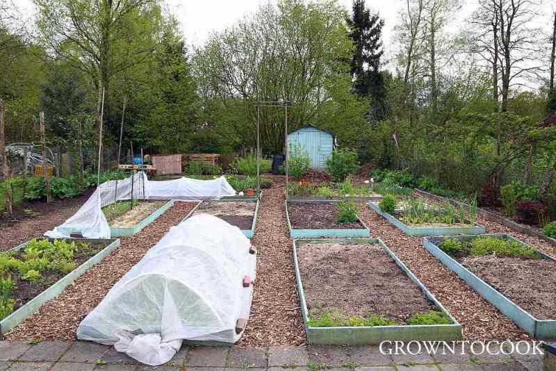 kitchen garden in april
