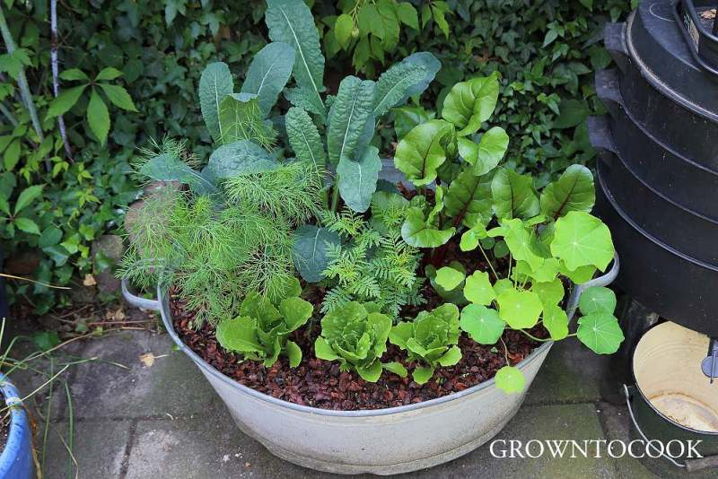 vegetable polyculture in a container