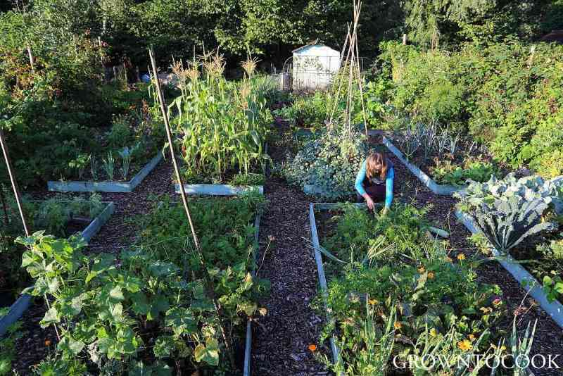 kitchen garden in septemberr