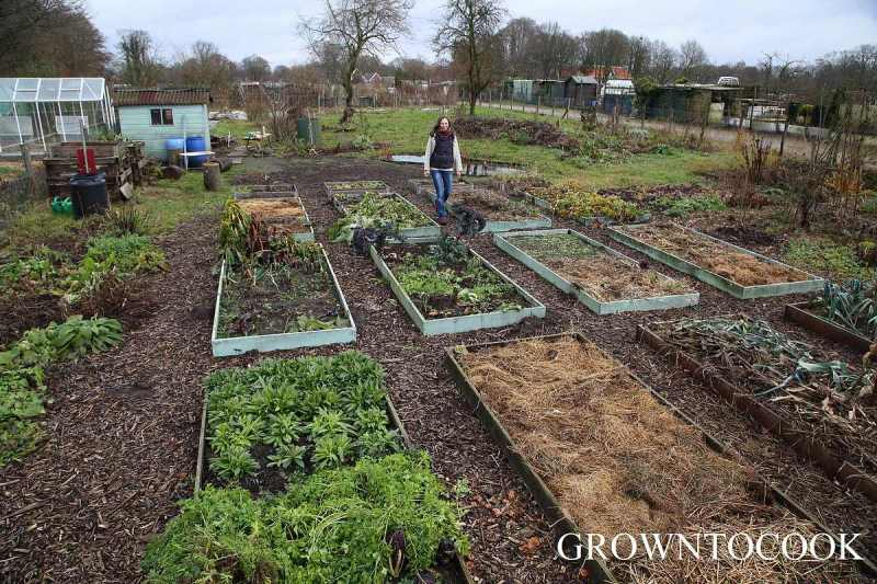 kitchen garden in december