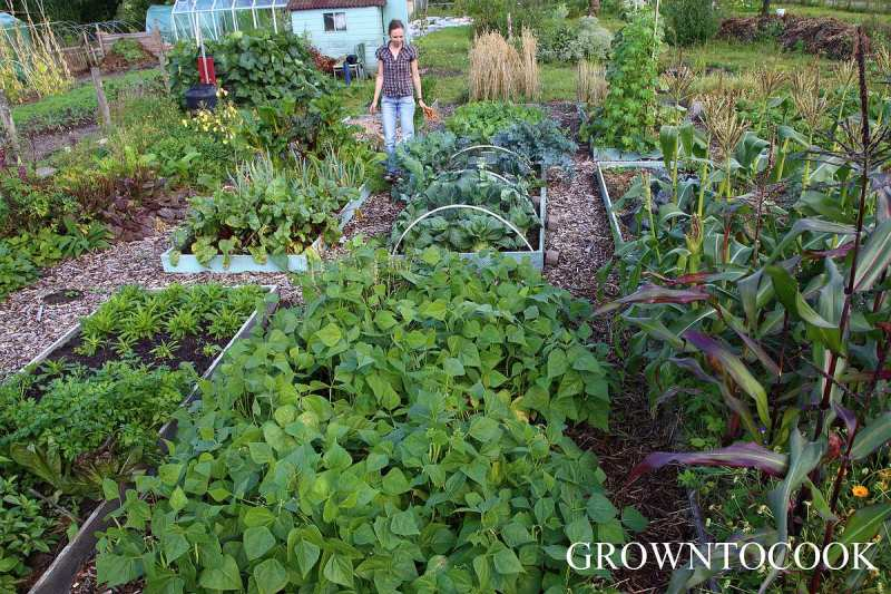 permaculture kitchen garden