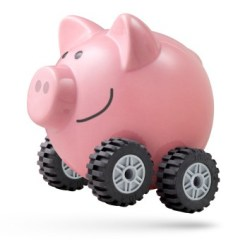 Happy pig on wheels