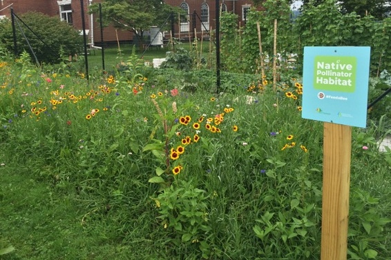 All About the Birds and the Bees: Attracting Pollinators to Your Garden