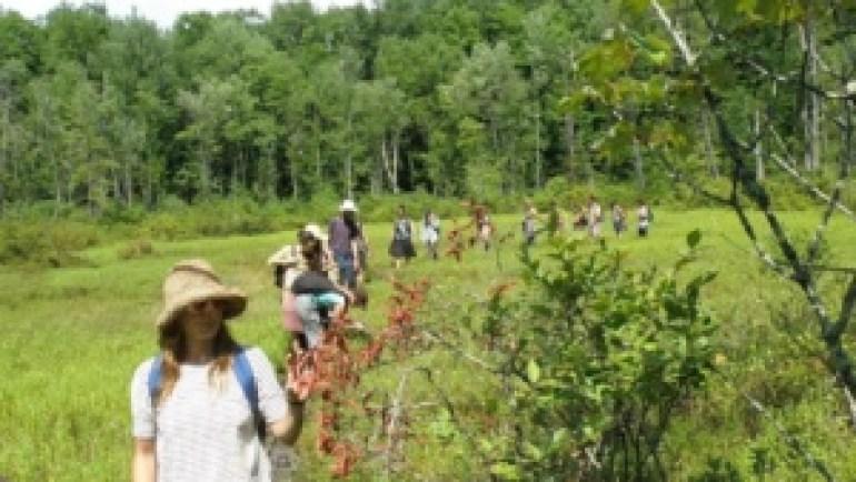Medicinal Herb Walk