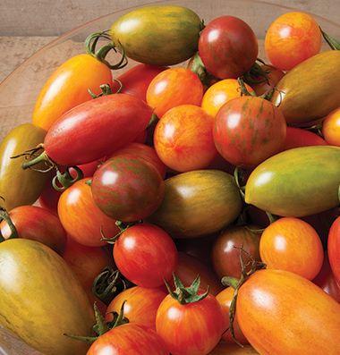 Backyard Farm School: Tomato School