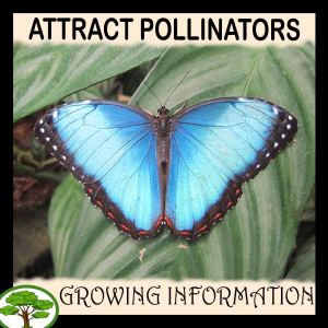 Attract pollinators