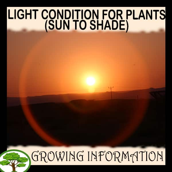 Light condition for plants (Sun to Shade)