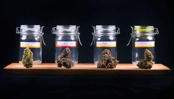 Como conseguir cannabis medicinal