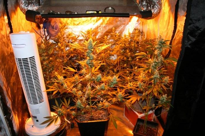 Estufa de cultivo indoor