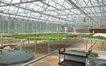 Herban Produce 2
