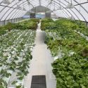 Hydroponic Greenhouse Running Full ON