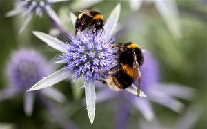 Approximately 90 per cent of the world's plants rely on pollinating insects to survive Photo: Rosemary Calvert/ Alamy