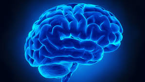 Friday Focus:  The Brain And The Voice