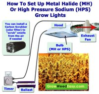 Compare Different Grow Lights | Grow Weed Easy