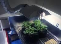 Grow Light Breakdown: Heat, Cost & Yields   Grow Weed Easy