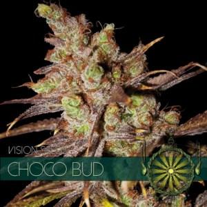 Choco Bud Fem Vision Seeds
