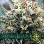SUPREME LEMON Fem VISION SEEDS