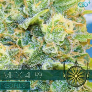 MEDICAL 49 CBD Fem VISION SEEDS