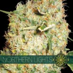 NORTHERN LIGHTS Fem 3