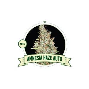 Amnesia Haze Auto City