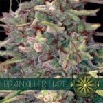Brainkiller Haze Fem Vision Seeds